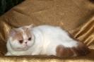 Галерея кошек_10