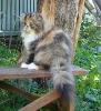 Галерея кошек_1