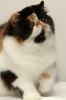 Галерея кошек_2