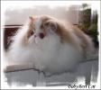 Галерея кошек_3