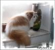 Галерея кошек_4