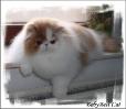 Галерея кошек_5