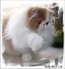 Галерея кошек_6