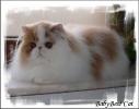 Галерея кошек_7