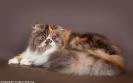 Галерея кошек_8